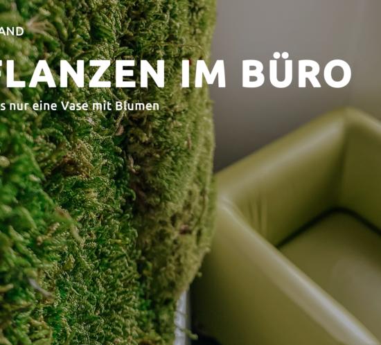 Büroland Titelbild Pflanzen im Büro