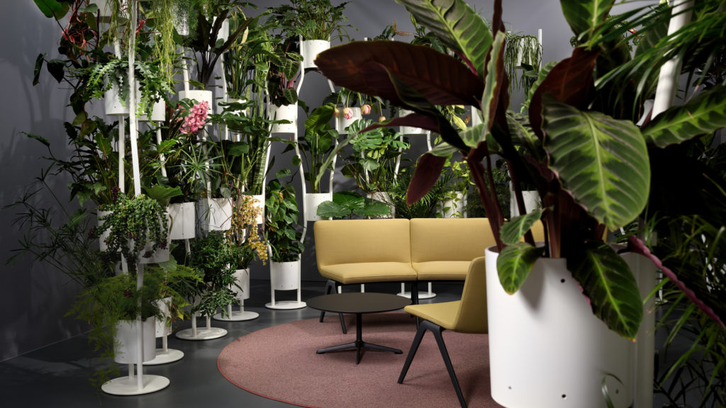 Brunner Pflanzen als Trennwandsystem